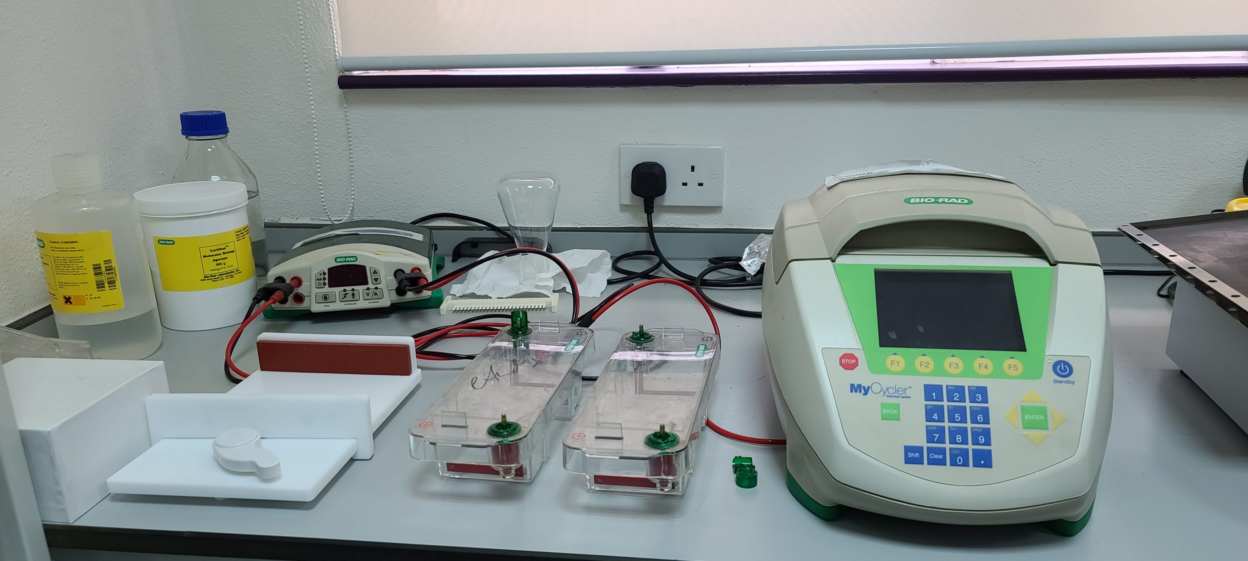 PCR and Electrophoresis